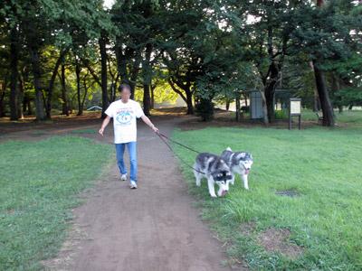 早朝の野川公園
