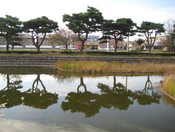 お池の観察
