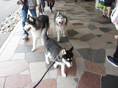 歩く三兄弟