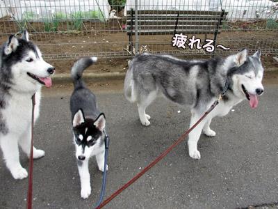 3ハス散歩