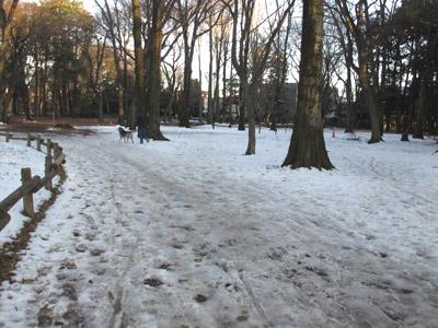 雑木林は雪だらけ