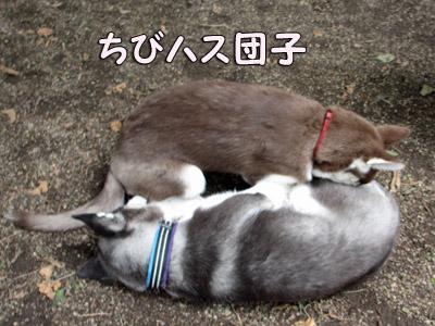 ちびハス団子