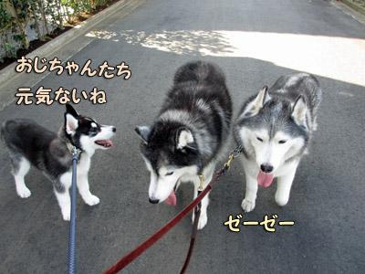 疲れる散歩