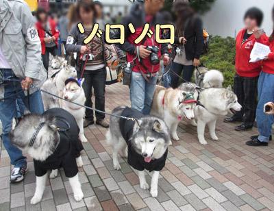 日獣祭ペットショー