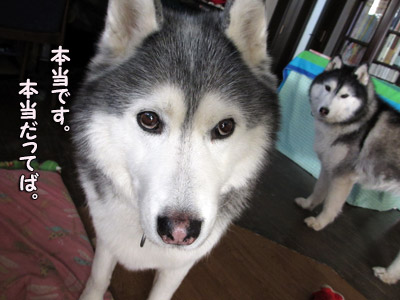 目を逸らす犯犬