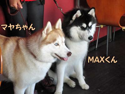 マヤちゃん&MAXくん
