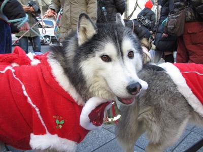 ハスキーズ・クリスマス