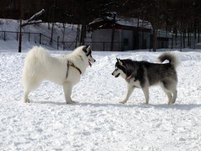 軽井沢雪遊び