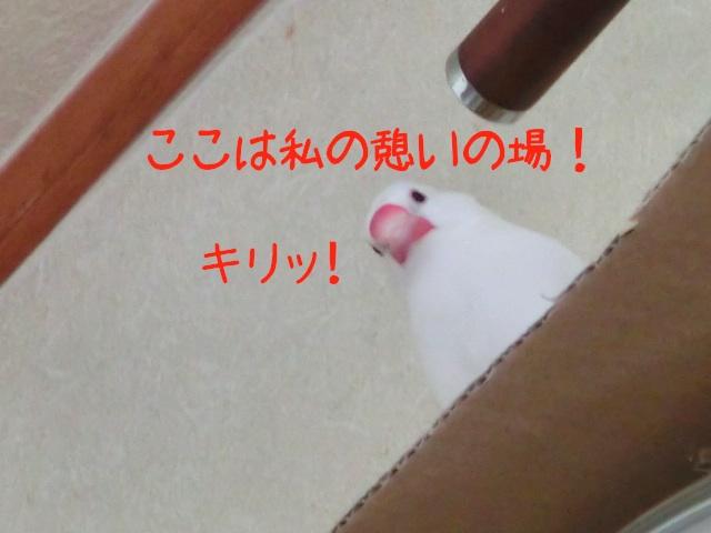 舞ふーちゃん