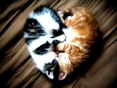 sAmazing-Kittens.jpg