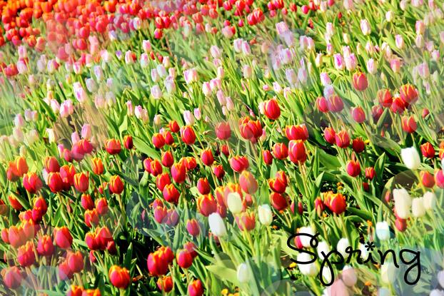 春よこいこい♪1