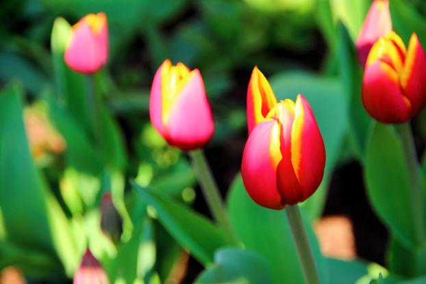 春よこいこい♪3