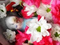 花に寄せる22