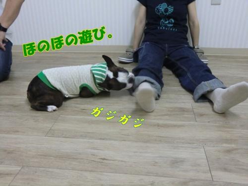 2011_0827_191125-CIMG6488.jpg