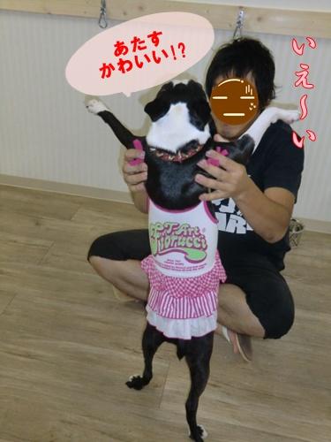 2011_0827_192210-CIMG6498.jpg