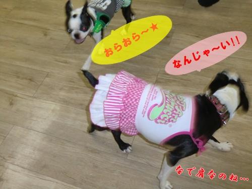 2011_0827_192244-CIMG6500.jpg