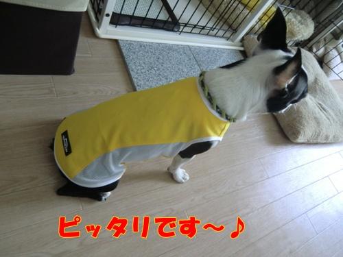 2011_0830_155428-CIMG6527.jpg