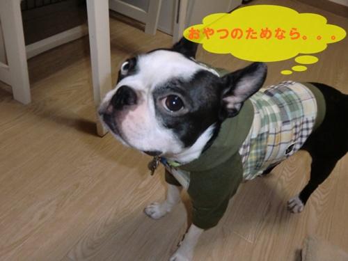 2011_0831_010228-CIMG6546.jpg