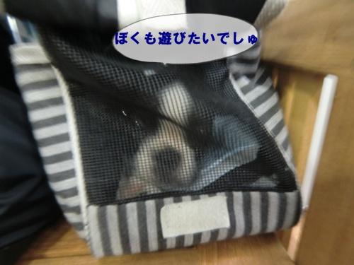 2011_0904_181926-CIMG6659.jpg