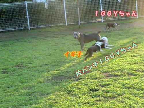 2011_0910_172351-CIMG6705.jpg