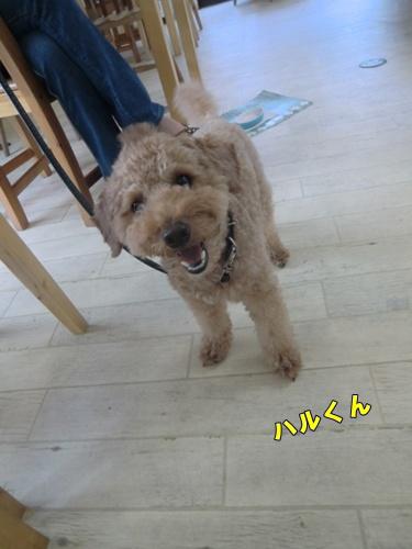 2011_0917_164130-CIMG6739.jpg