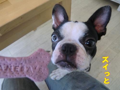 2011_0917_164310-CIMG6742.jpg