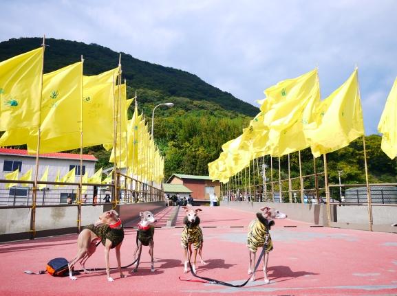 幸せの黄色い・・・旗!