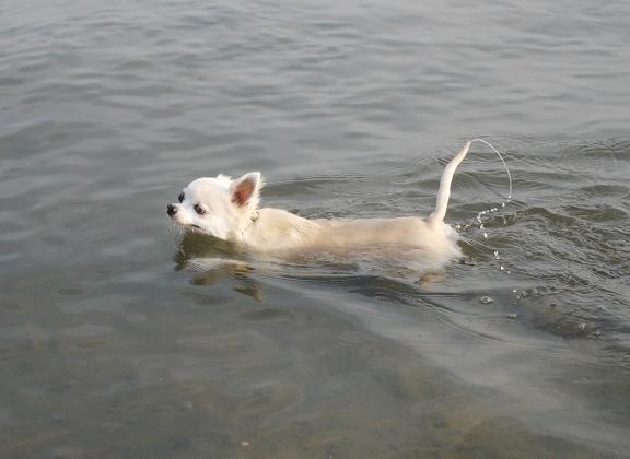 この水の滴るしっぽが好き♪