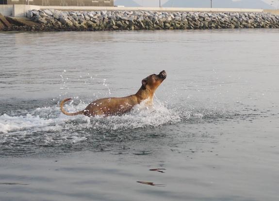 この後は、すぐに体勢を立て直して 水の中をラッセルしてました~