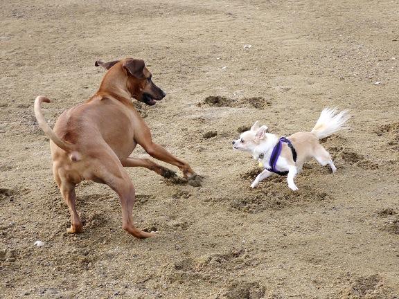 ヒトの近くでやるので、飼い主も砂しぶきを浴びます。