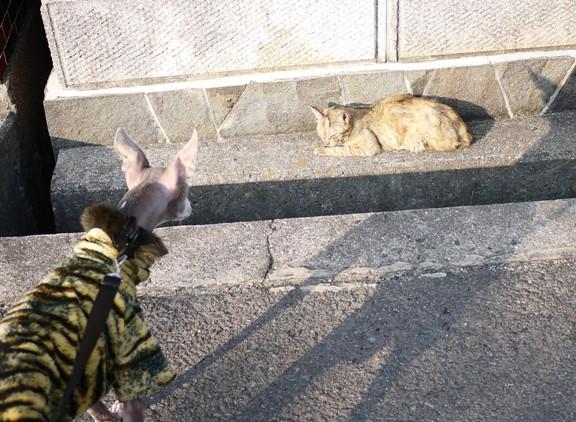 優しい色合いのサビ猫