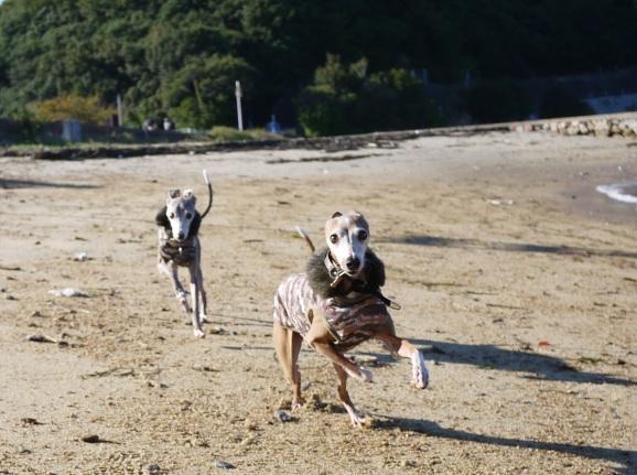 みんなで走ったんだけど、日陰だったので写真がブレてて使えなかった~