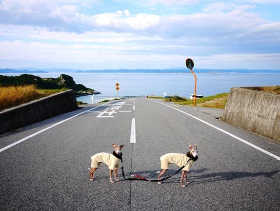 田舎道だから許される写真