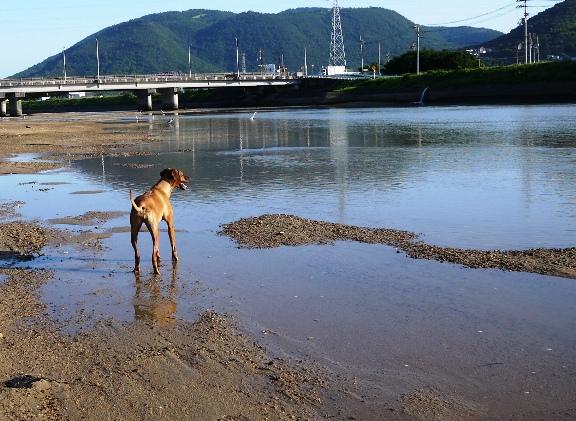 川→海へ。引き潮中~