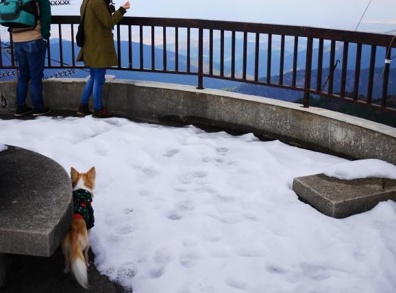 一番高い天狗岳?の頂上は雲がかかって見えませんでした