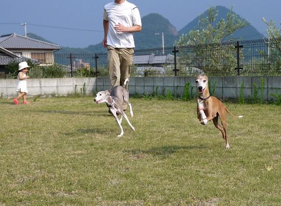 みんなが走ると、Jちゃんが喜びます