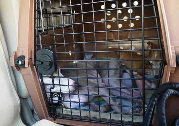 帰りのフェリーはトラックの熱気に囲まれて、クーラー付けていても暑かった!