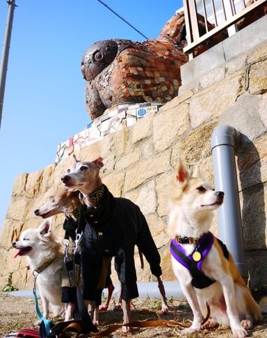 犬島の犬ハウスと犬達