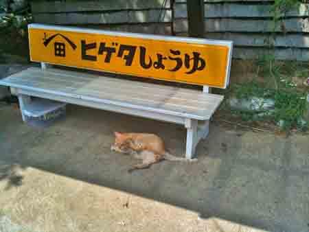 君ヶ浜猫_edited-1