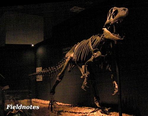 スマートなアロサウルス[恐竜博2011/国立科学博物館]