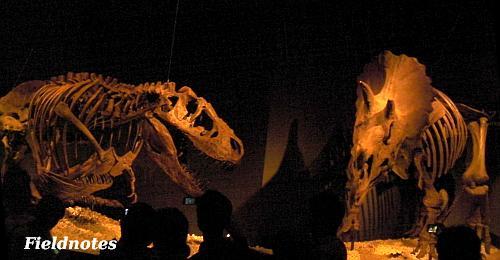 展示室の角でトリケラトプスを待ち構えているティラノサウルス[恐竜博2011/国立科学博物館]