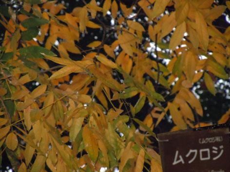 916-6mukuroji.jpg