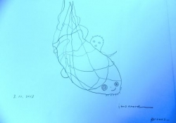 蛸壺確保描き