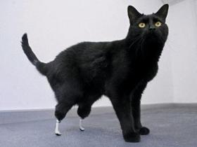 Bionic Cat Oscar
