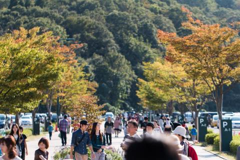 越後丘陵公園 秋