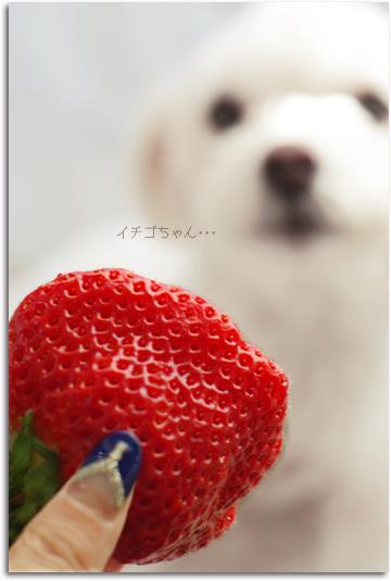 イチゴちゃん・・・