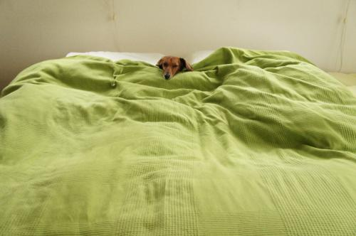 お姫様のベッド