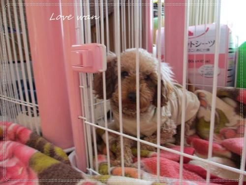 mini2IMG_3908.jpg
