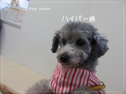 mini2IMG_4019.jpg
