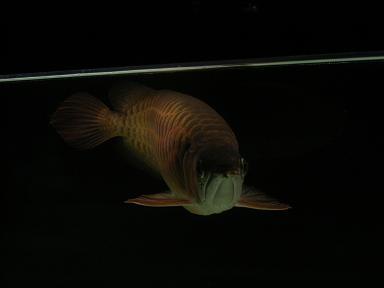 古代魚03